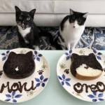 """藤あや子の愛猫「マル」と「オレオ」が""""ねこねこ食パン""""に。本日より発売開始"""