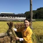 """収穫の秋。岩本公水が""""公水こまち""""の稲刈り。「新曲『なさけ舟唄』を聴きながらお米を味わって」"""
